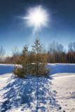 Sunny Snowscape 33499