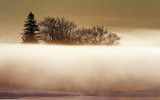 Trees Above Fog 33597