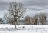 Snowscape 20130302