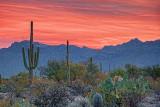 Arizona Sunrise 74889