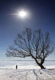 Frozen Lake Ontario 34049,51