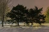 Pines At Night 34210-2