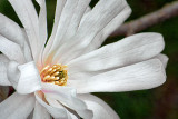 Spring Blossom 20130430