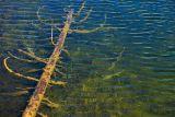 Submerged Tree 20060830