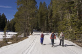 Morning walk on Glacier Point Road
