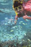 Guam Ezuke Snorkeling...Sirenas in our tropical oasis...