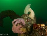 Rockaway Reef