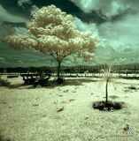 IR Photography 1