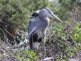 Birds of Wakodahatchee Preserve