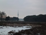 Westerheide met zicht op KPN-toren aan de Witte Kruislaan op het Media Park Hilversum