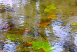Water Colored Leaves