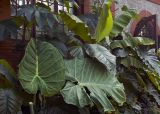 Large Fronds