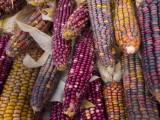 corn pdx.jpg
