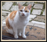 A local Petit Chat.