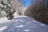 Newfound Gap Snow 3
