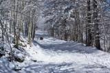 Newfound Gap Snow 4