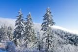Clingmans Dome Rd Snow 3