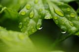 155-365 121110 F2 Rains 007 sm.jpg