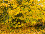 20121013_Bamberton Park_0309.jpg