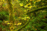 20121013_Gold Stream_0175.jpg