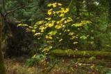 20121013_Gold Stream_0213.jpg