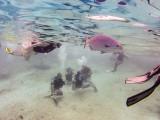 20130315_Cozumel Island_0347.jpg