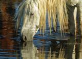 Portrait at the Waterhole.