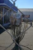 Abandoned and Overgrown - Sebastapol California