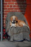 Shop Dog Portrait - Petaluma, California