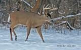 0648-Ten-Point-Buck