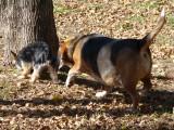 dogpark 008 (Copy).JPG