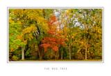 The Red Tree.jpg