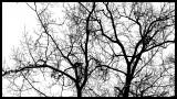 I am tree .jpg