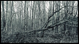 If a Tree Fall In the Forest and There is No One There copy.jpg