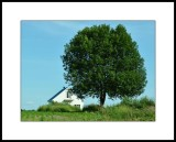 Je t'aime gros comme un arbre / I love you as big as a tree