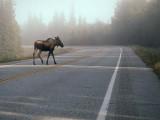 Petit matin en Alaska / Morning in Alaska