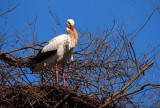 The Storks are Back