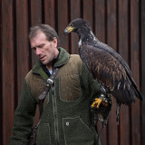The Falconer with Molly
