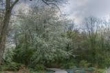 Abundance of Blossoms