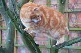 Monty climbing
