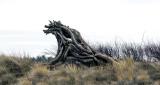 Prehistoric Monster?