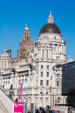 MDHB and Liver building