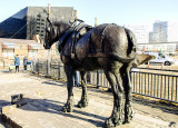 Liverpool Carters Working Horse Monument
