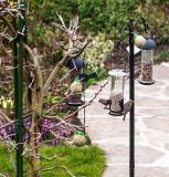 Bird feeder in the garden