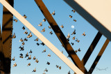 The Bridge, Birds and the Moon