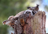 Mom And Owlet