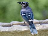 blue-feathers.jpg