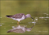 WaterDrops and a Lesser Yellowlegs