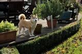 Zita in our garden