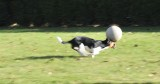 Jacko in full action